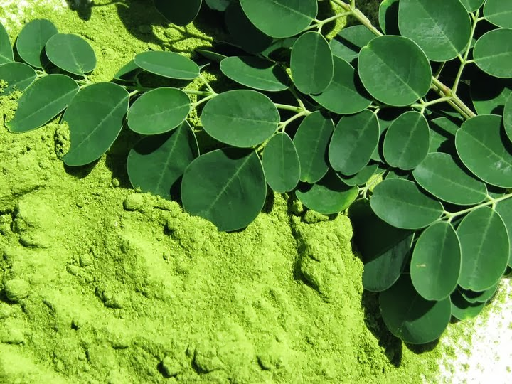 Moringa Plant Benefits Hair Growth